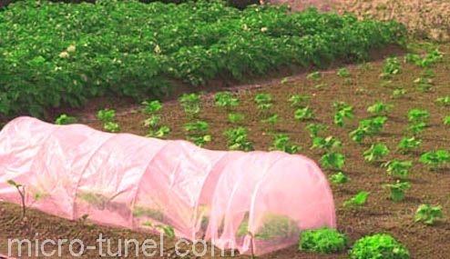micro túnel en cultivo de hortalizas