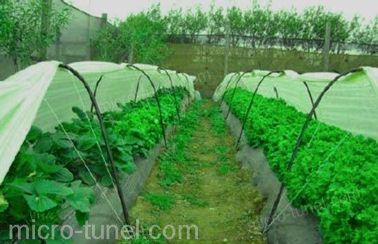 manta térmica en cultivo